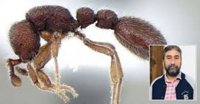EnMalayalam-New type of Ants-dekYzolm2s.jpg
