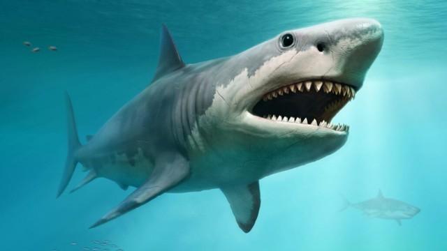 EnMalayalam_Megalodon Shark-aYpS4JwNC5.jpg