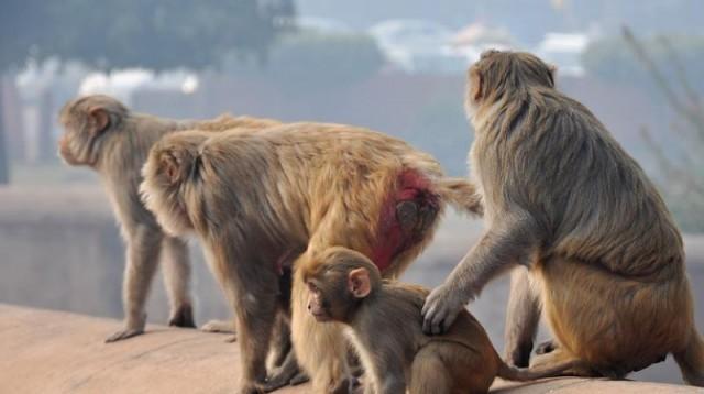 EnMalayalam_Monkey Fever-XotmEG9X5a.jpeg