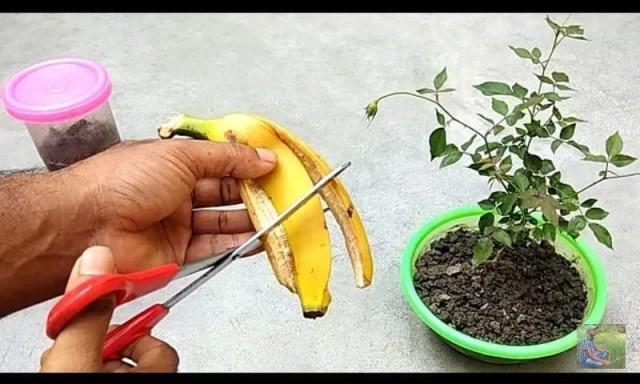 banana-XM0HkC9NWA.jpg