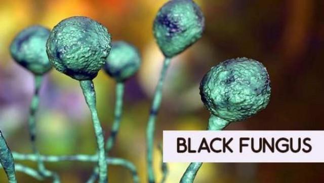 black-fungus1-aO1Hc5aE5t.jpg