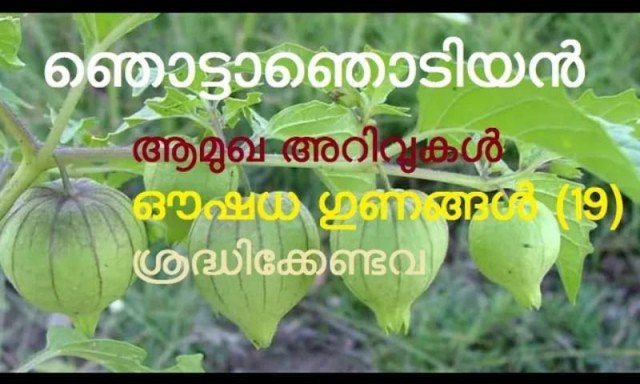 golden berry-QpNXimu3jB.jpg