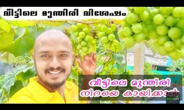 grape-MNRSVp3Xor.jpg